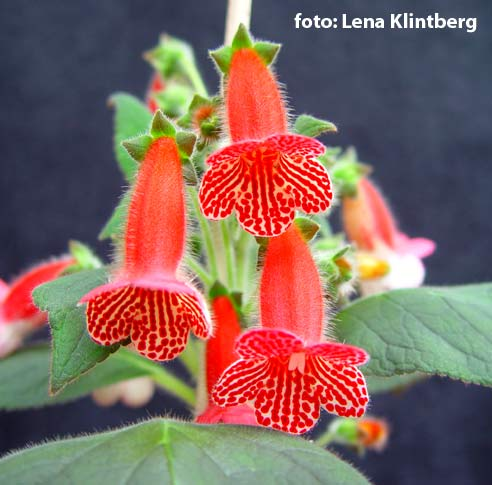Цветы и растения каталог и фото 2450